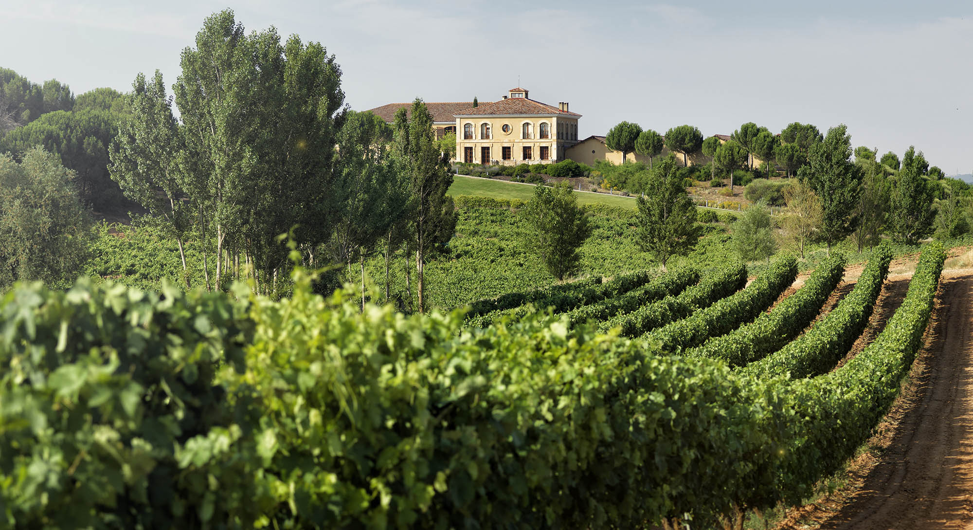 Rioja fotografia vino navidad foto vitoria erredehierro ribera del duero aster