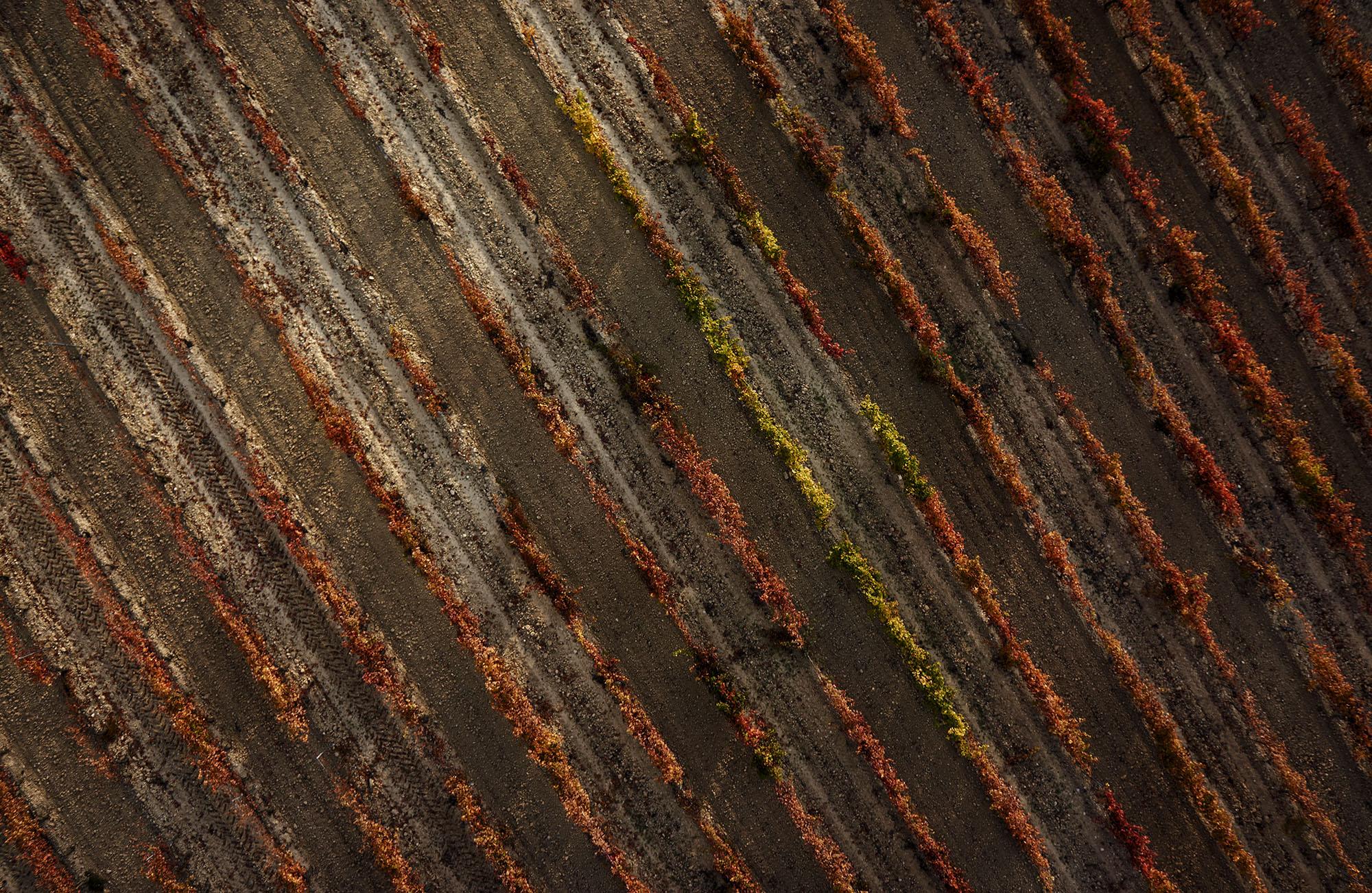 Rioja Alavesa vino wine paisaje uvas Rioja fotografia Hasselblad Nikon phase one viñedo viña tinto